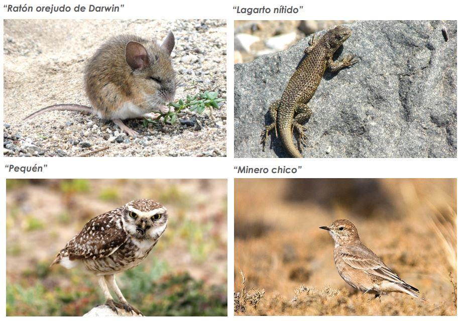 animales de los desiertos