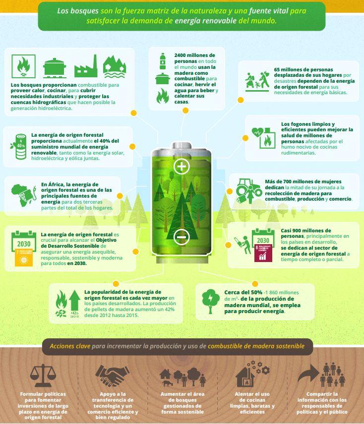 beneficios de los bosques del mundo