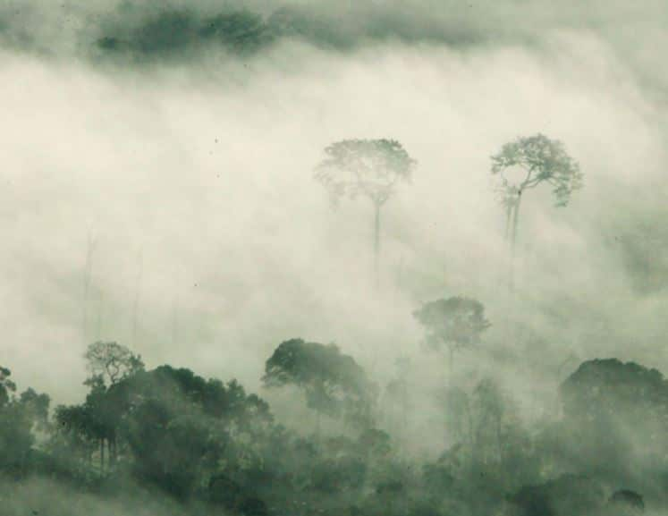 biodiversidad del amazonas
