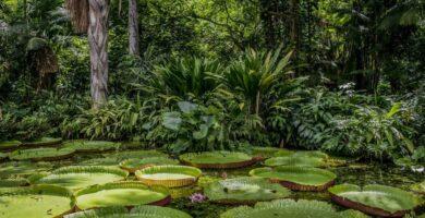 biodiversidad de la selva amazónica