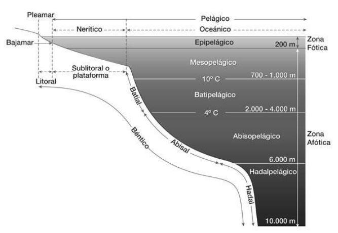clases de ecosistemas marinos