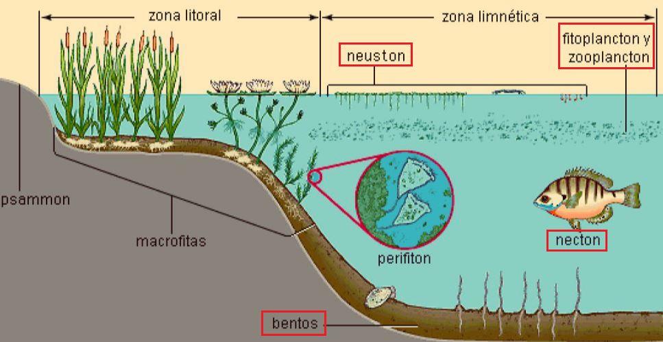 organismos acuáticos