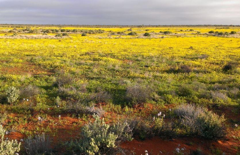 cuales son las plantas del bioma tundra