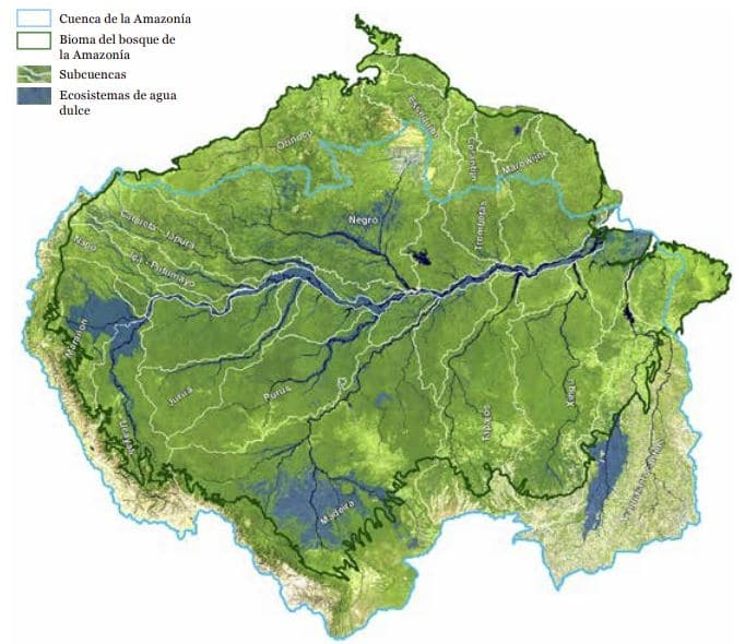 ecosistemas de la amazonia
