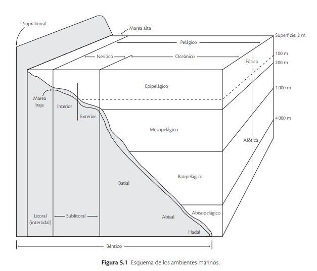 esquema ambientes marinos