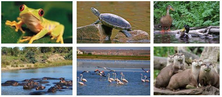 fauna de los ecosistema mixtos