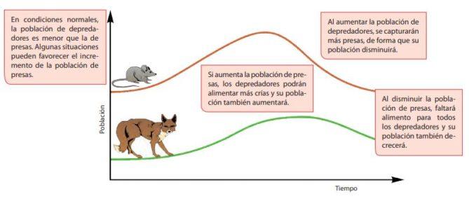 fluctuaciones en la biocenosis