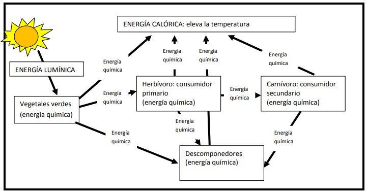 ejemplo flujo de energía