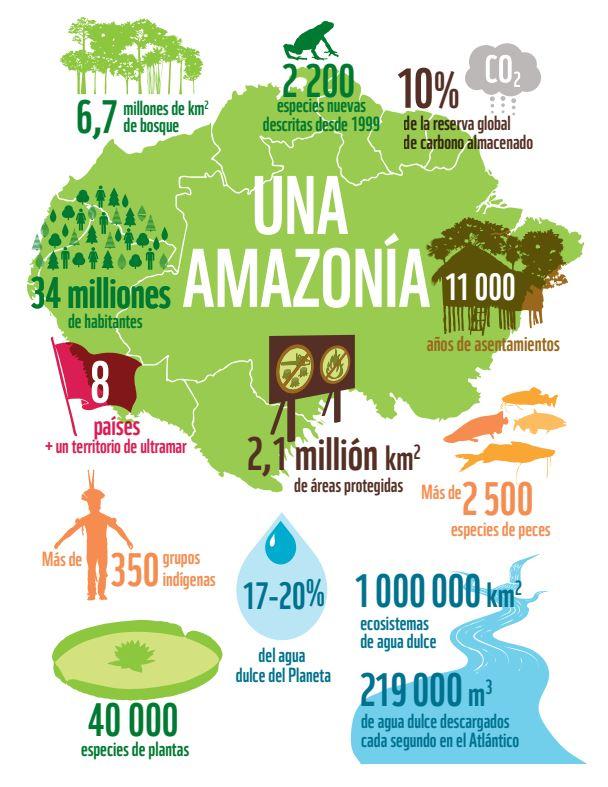 importancia amazonas en el medio ambiente