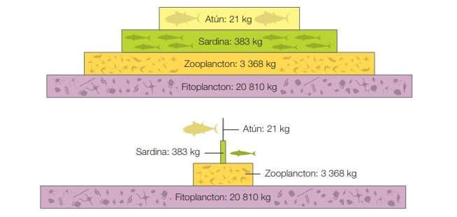 ejemplo pirámide biomasa acuática