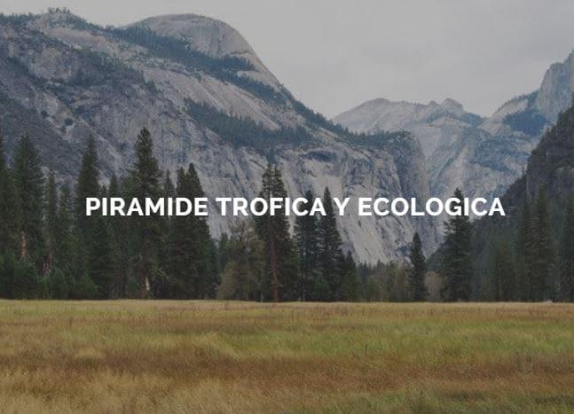 pirámides tróficas y ecológicas