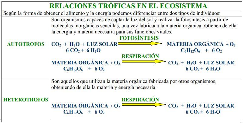 Cadena alimenticia y red trófica; terrestres y acuáticas | OVACEN