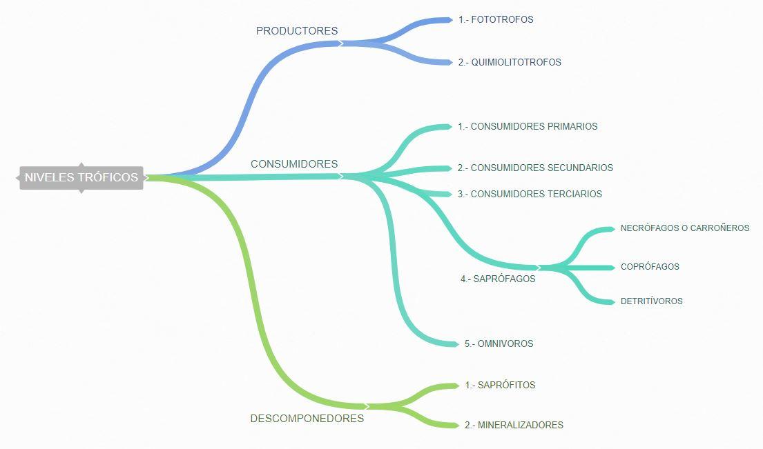 clasificación esquema niveles tróficos