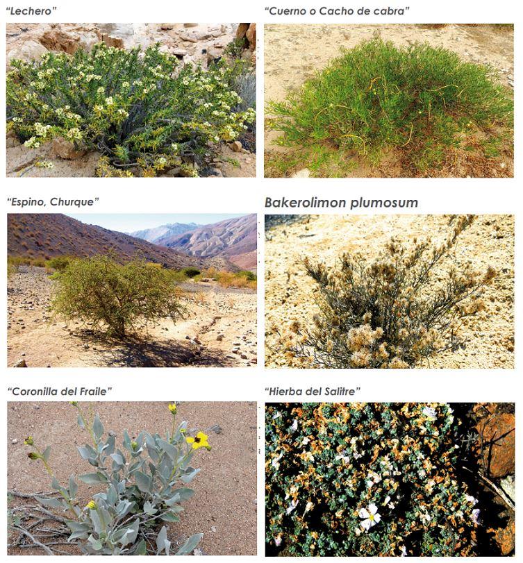 ejemplo vejetación desierto