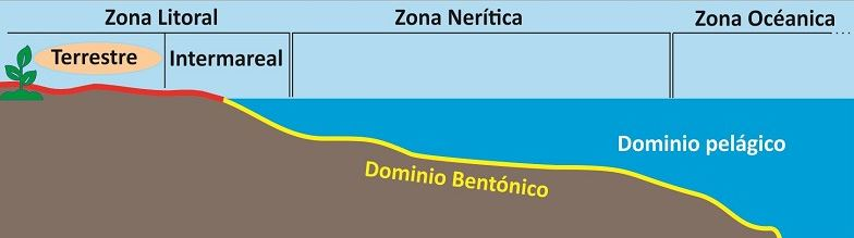zona litoral