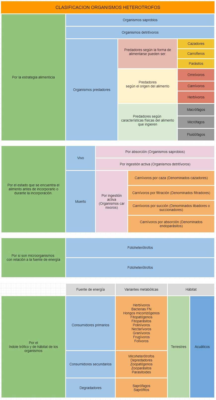 clasificación de los heterótrofos