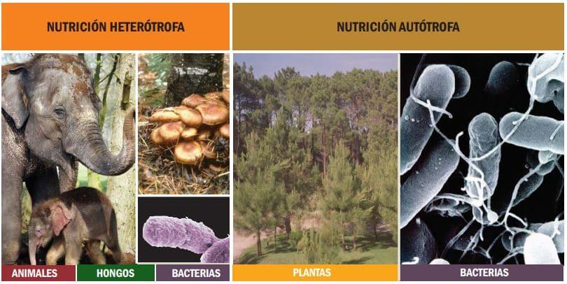 ejemplo de nutrición heterótrofa