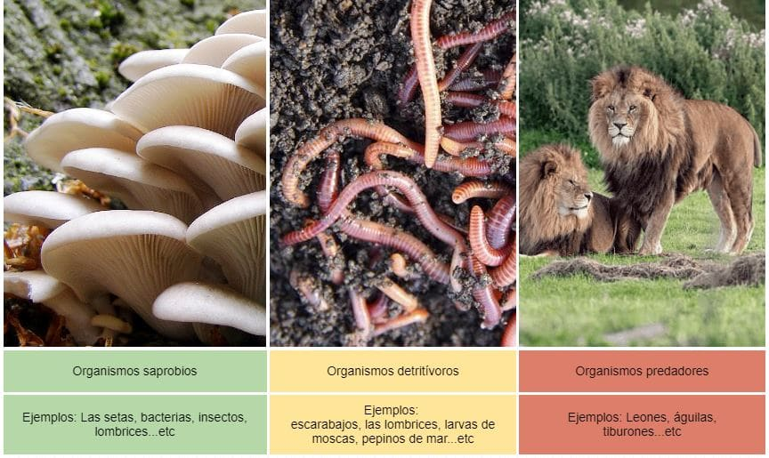 ejemplos de heterótrofos