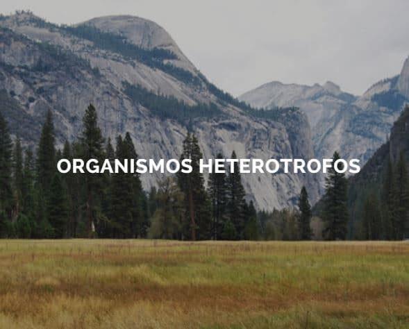 seres heterótrofos