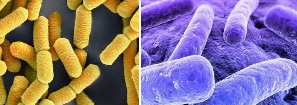 ejemplos microorganismos heterótrofos