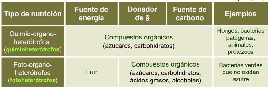 esquema nutrición heterótrofa