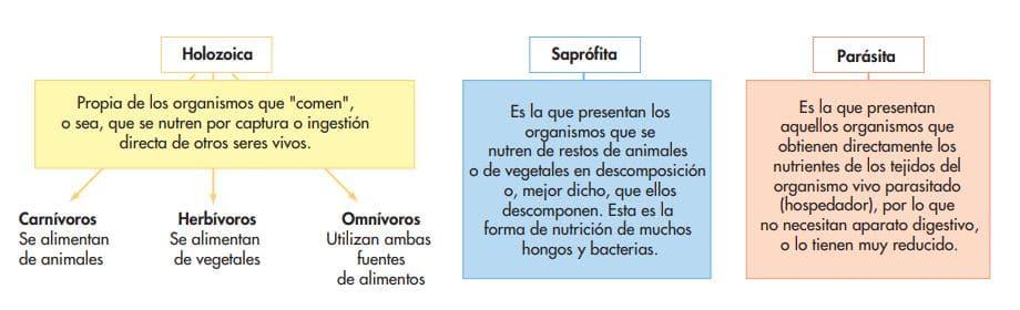 tipos de nutrición heterótrofa