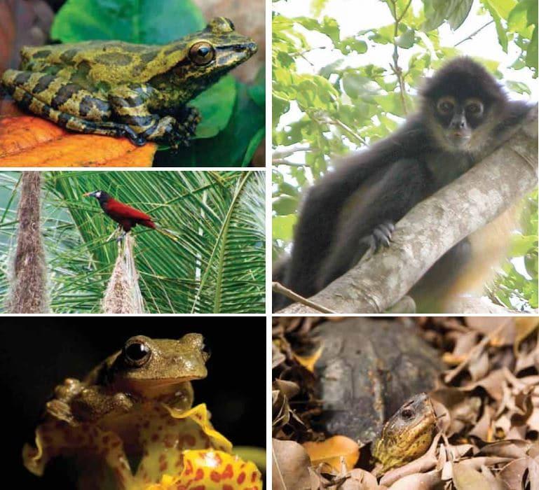 animales de territorio mexicano