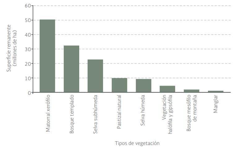 tipos vegetación país mexicano