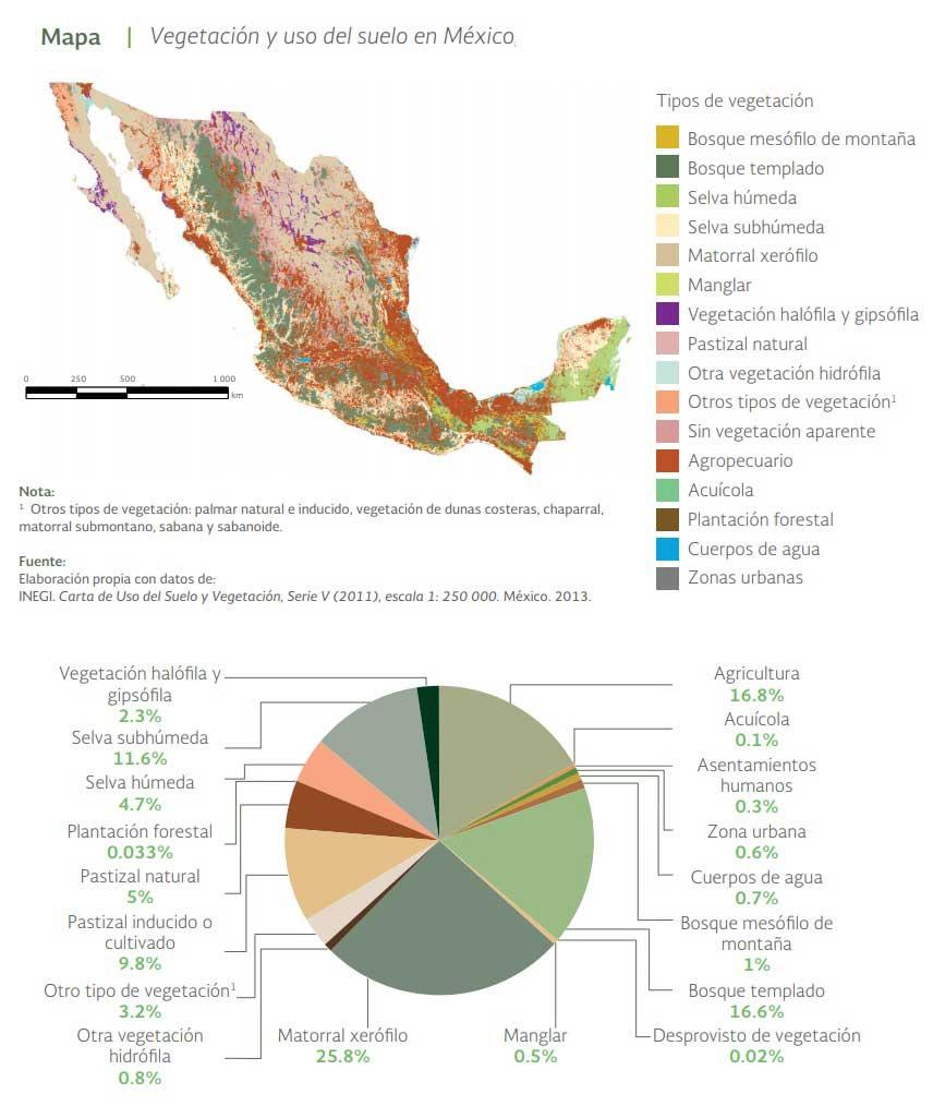 vegetación México