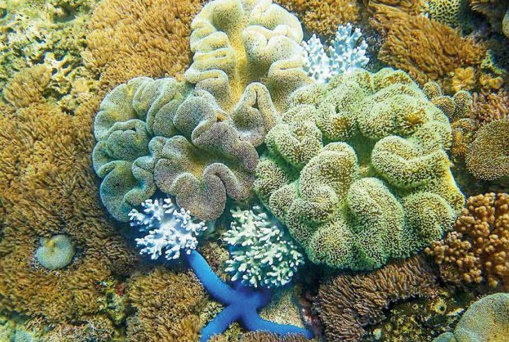 biodiversidad acuática en Colombia