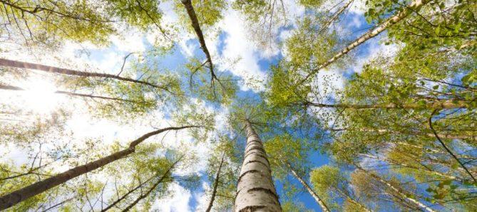 curso online sobre medio ambiente