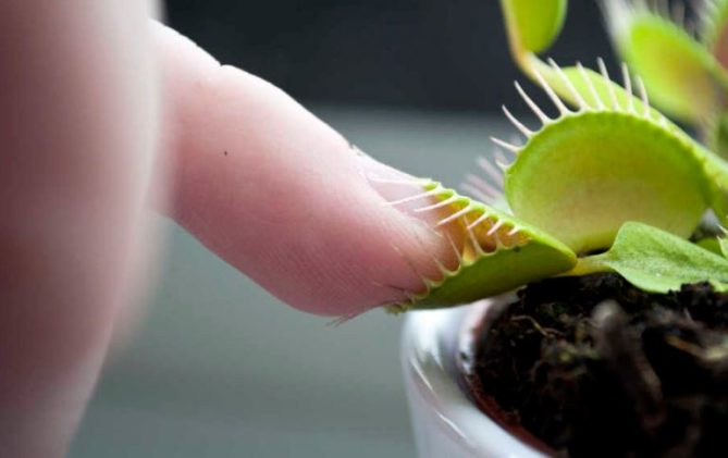 planta no gusta masaje