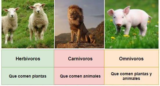 clases alimentación animales