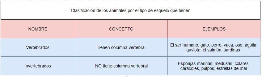 clasificación animales tipo esqueleto