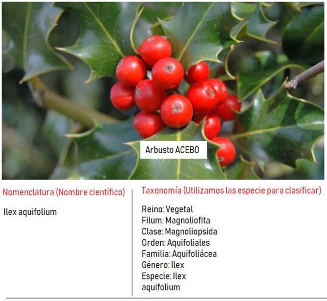 ejemplo clasificación de los seres vivos