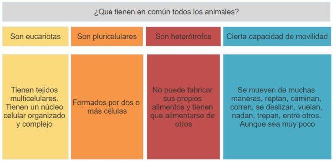 que tienen común todos los animales