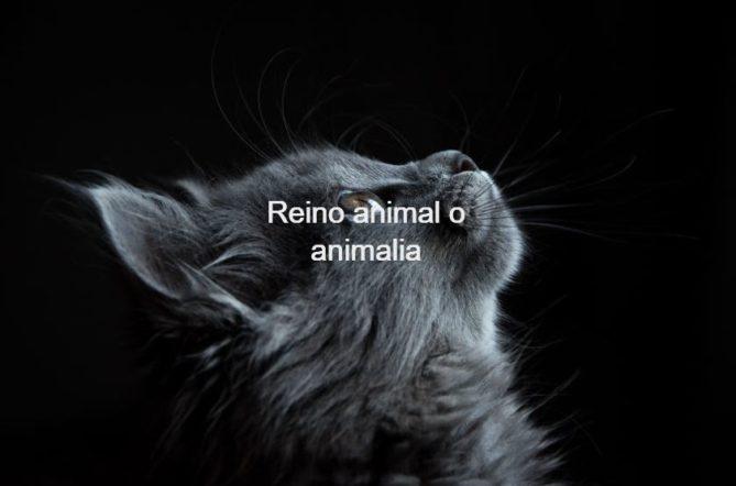 reino animal o animalia
