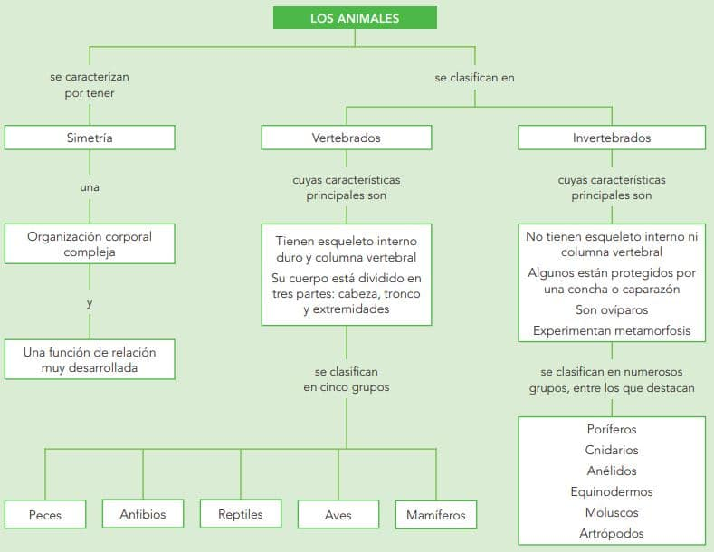 comparativa animales vertebrados e invertebrados