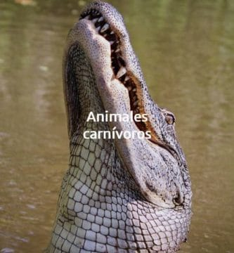 animal carnívoro