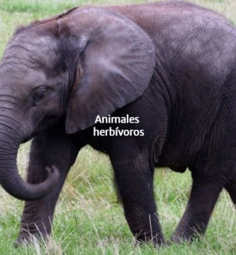 animal herbívoro