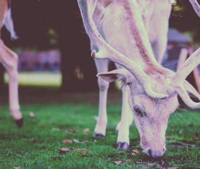 qué comen los animales herbívoros