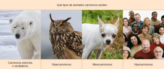 qué tipos de animales carnívoros existen