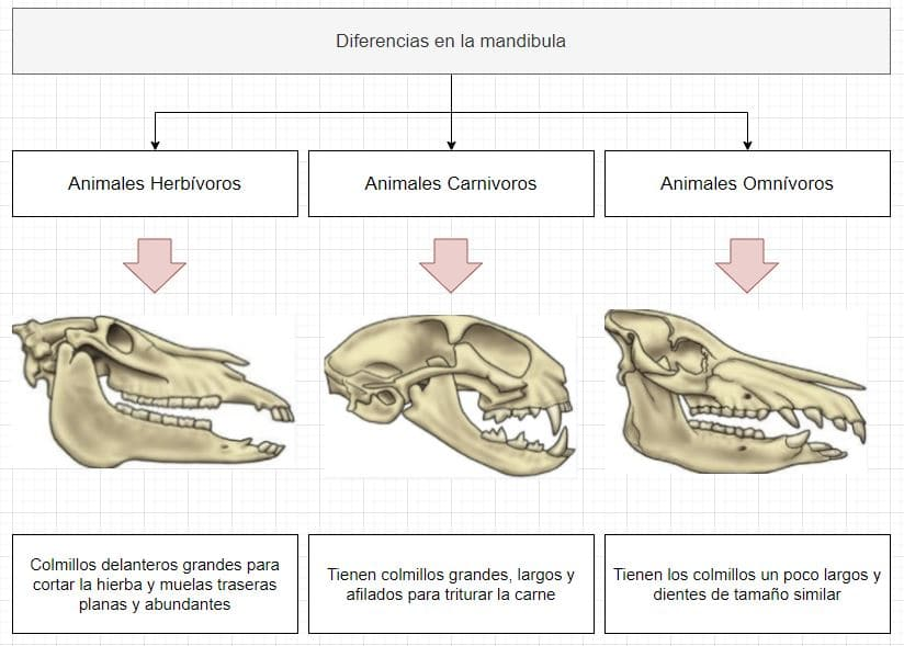 dientes de los diferentes tipos deanimales