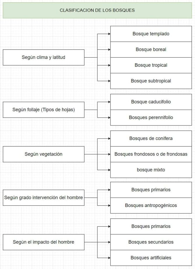 clasificación de los bosques