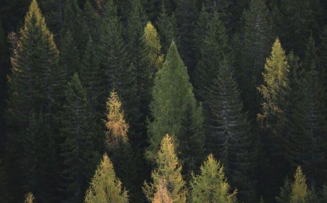 tipos de bosques en el planeta